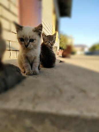 Отдаем котят в хорошие руки