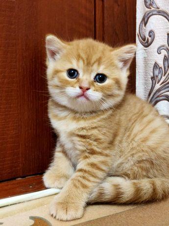 Продам шикарного котика