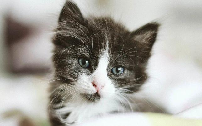 Отдам котят игривые здоровые красивые