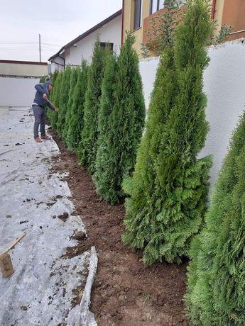 Plante ornamentale pentru gradina dvs.