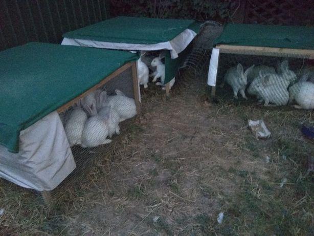 Vand custi exterioare pentru iepuri