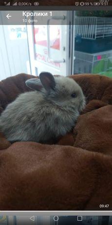 Продам кроликав декоративных