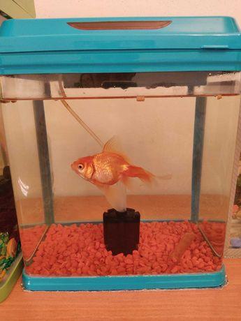 Аквариум + Золотая рыбка (15 см)