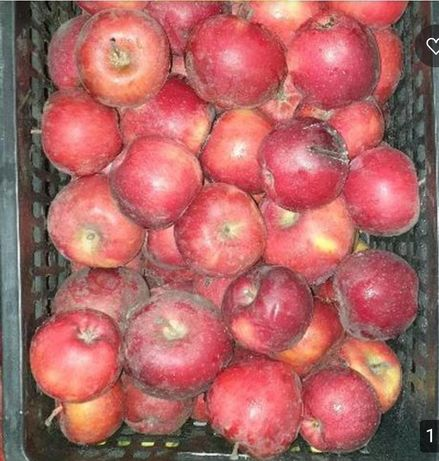 Американка яблоки оптом