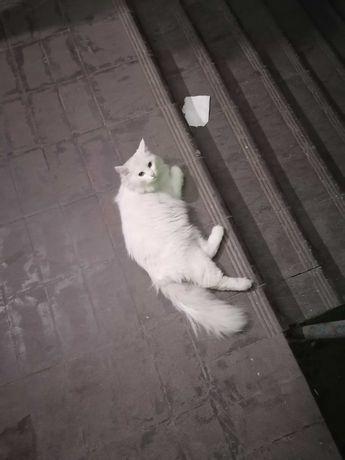 Найдена кошка или кот