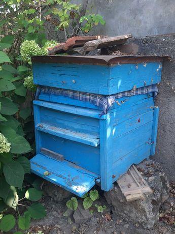 Кошер за   пчели
