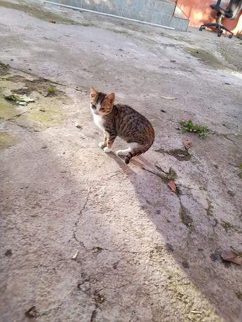 Ofer spre adopție o pisica