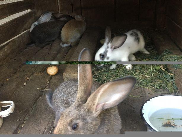 Кролики разные