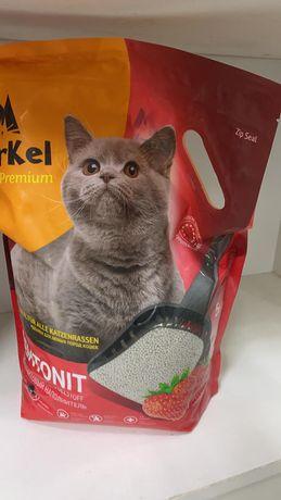Отдам даром котят
