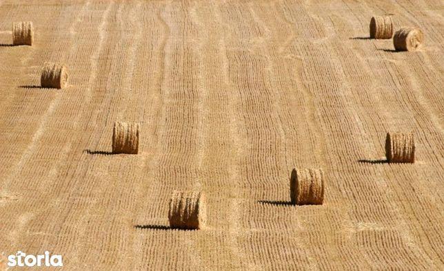 Vand teren agricol 7 ha Falciu jud. Vaslui