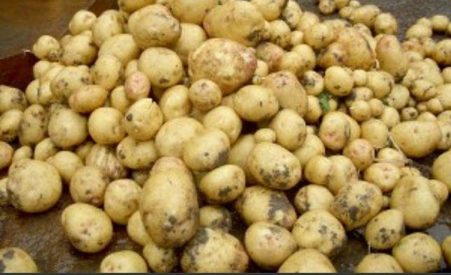 Картофель домашний,картошка