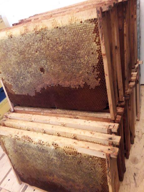 Rame miere fagure