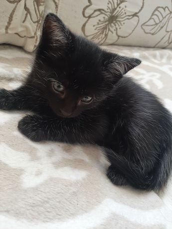 Котёнок девочка 1 месяц