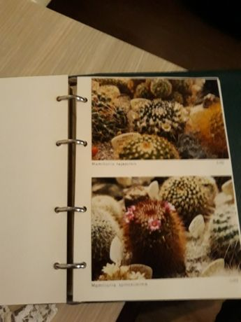 """Album """"Cactusi"""""""