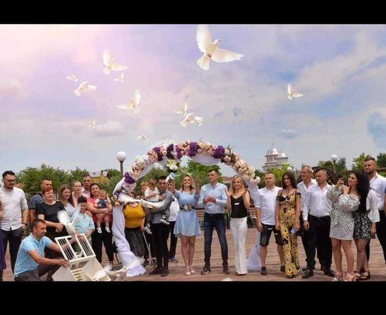 Porumbei albi pentru nunti si alte evenimente Calarasi pret 150 lei