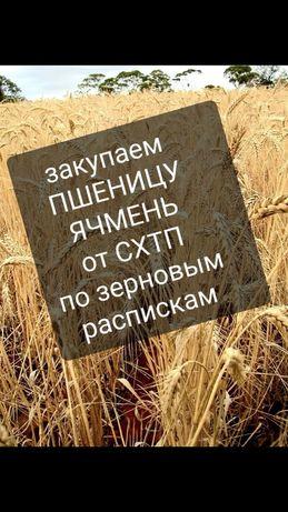 Пшеница 4-5-3 класс
