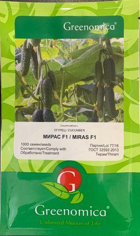 Продаем семена огурца F1 Мирас