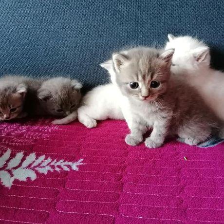Малышки маленькие сладкие котяточки