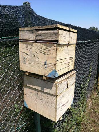 Nucleu împerechere mătci albine