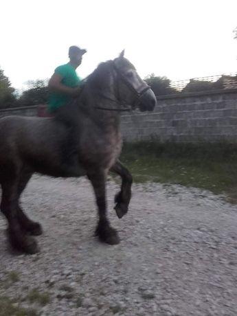 Vând toti caii din poze