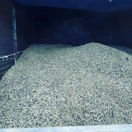 Падсос торпақ , 1,5 жасар өгізшелер саттылады еттей
