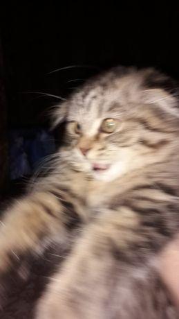 Кошечка Мики ищет любящие заботливые руки