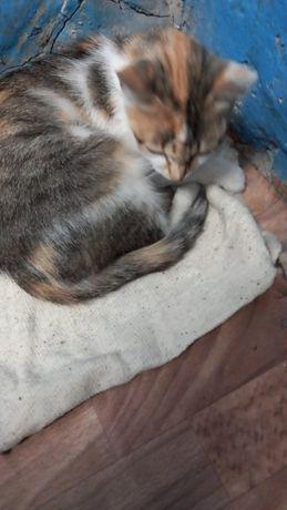 Помогите найти дом кошке!
