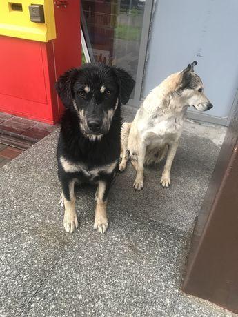 Собаки ищут мам и пап