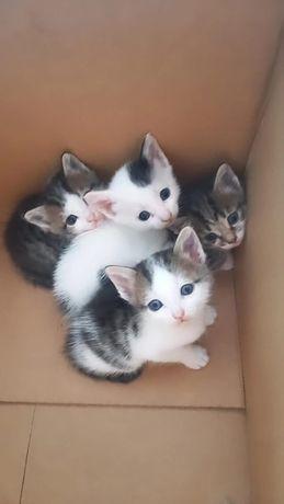 Милые котята ждут добрую хозяйку