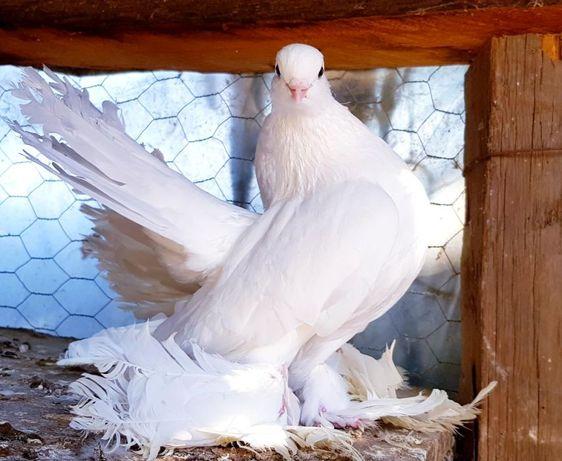 гълъби различни видове по договаряне