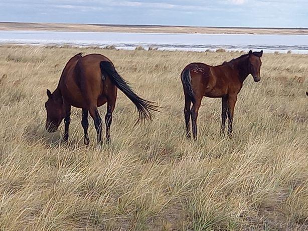 Продам лошадей 3 головы