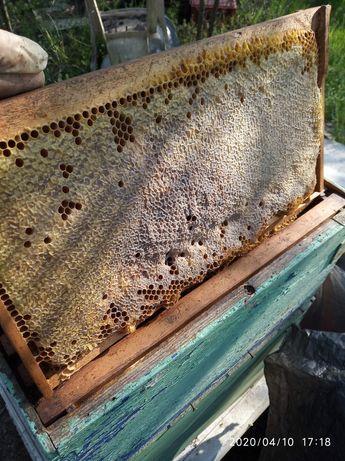 Vând rame stup 3/4 pline cu miere căpăcită în fagure. Roiuri
