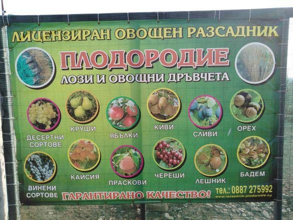 Лози и овошки