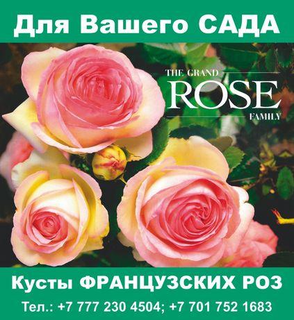 Саженцы. Розы для сада и клумбы