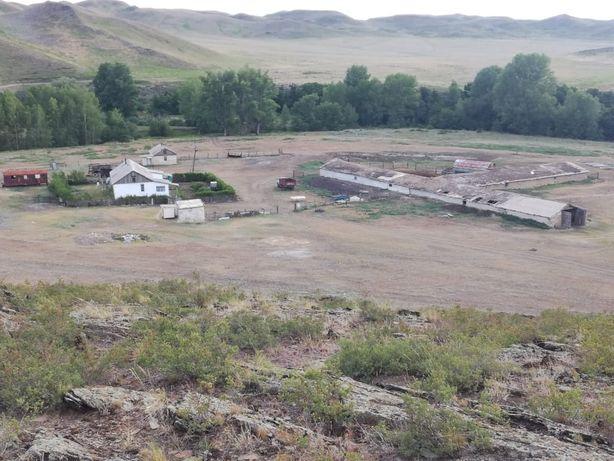 Крестьянское хозяйство в Актюбинской области