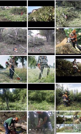 Defrisare terenuri Arbori Arbusti Maracini Ambrozie