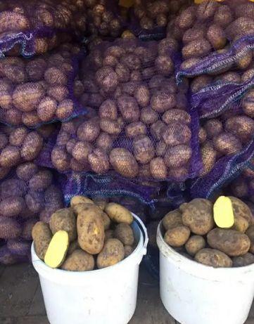 Продаю картошка оптом