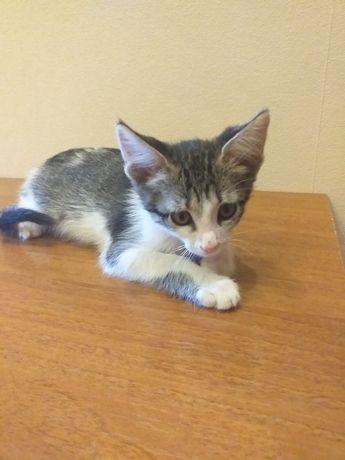 Отдам котёнка 2,5 месяца