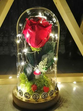 Trandafiri criogenati ideea perfectă de cadou