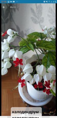 Продам разные комнатные цветы