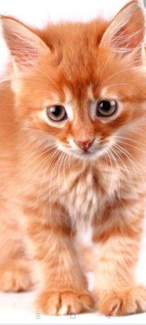 Котик рыженький мальчик