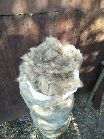 Продам собачью шерсть
