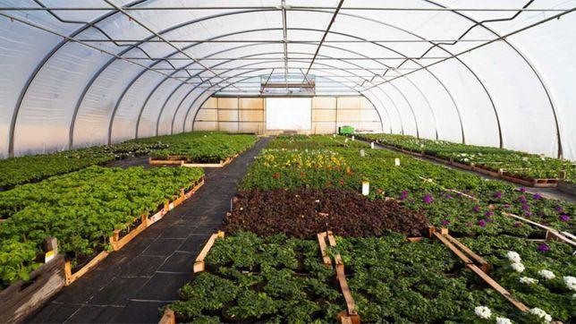 Solarii legume/ fructe/ flori