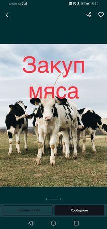 Говядина Конина Свинина