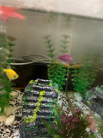 Рыбки без аквариюма бесплатно