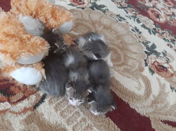 Кошку с котятоми
