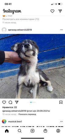 умничка щенок - даром!