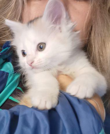 Отдам котят 1,5 месяца