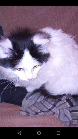 Котик, возраст около года