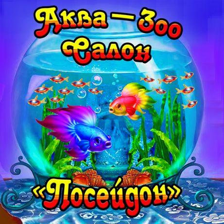 "Аква-Зоо Салон ""Посейдон"",работает!!!"